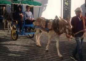 Burro Taxi