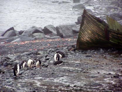 Penguins Near Camara Base in Antarctica