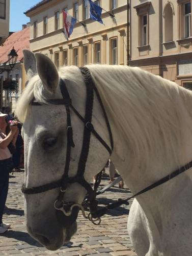 Commander's Horse at Zagreb Changing of Guard