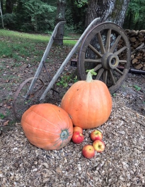Harples Decorative Pumpkins